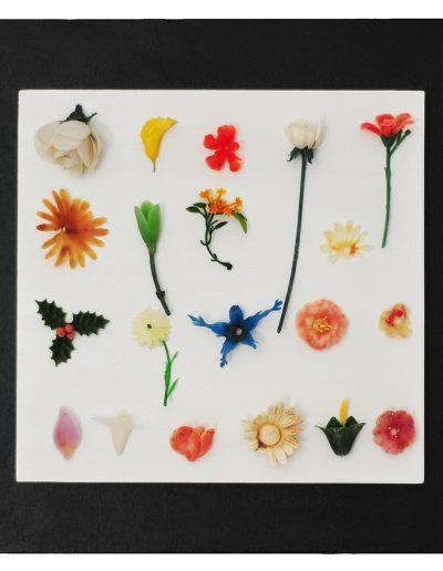 Botanica cm 40X40 Plastica dal Mare 2012